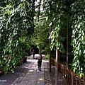 YTS_YTS_20180713_Japan Kyoto Ryoan-ji日本京都龍安寺/世界文化遺產/枯山水石庭031_3A5A9327.jpg
