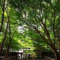YTS_YTS_20180713_Japan Kyoto Ryoan-ji日本京都龍安寺/世界文化遺產/枯山水石庭036_3A5A9357.jpg