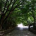 YTS_YTS_20180713_Japan Kyoto Ryoan-ji日本京都龍安寺/世界文化遺產/枯山水石庭037_3A5A9376.jpg