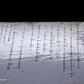 YTS_YTS_20180713_Japan Kyoto Ryoan-ji日本京都龍安寺/世界文化遺產/枯山水石庭050_3A5A9616.jpg