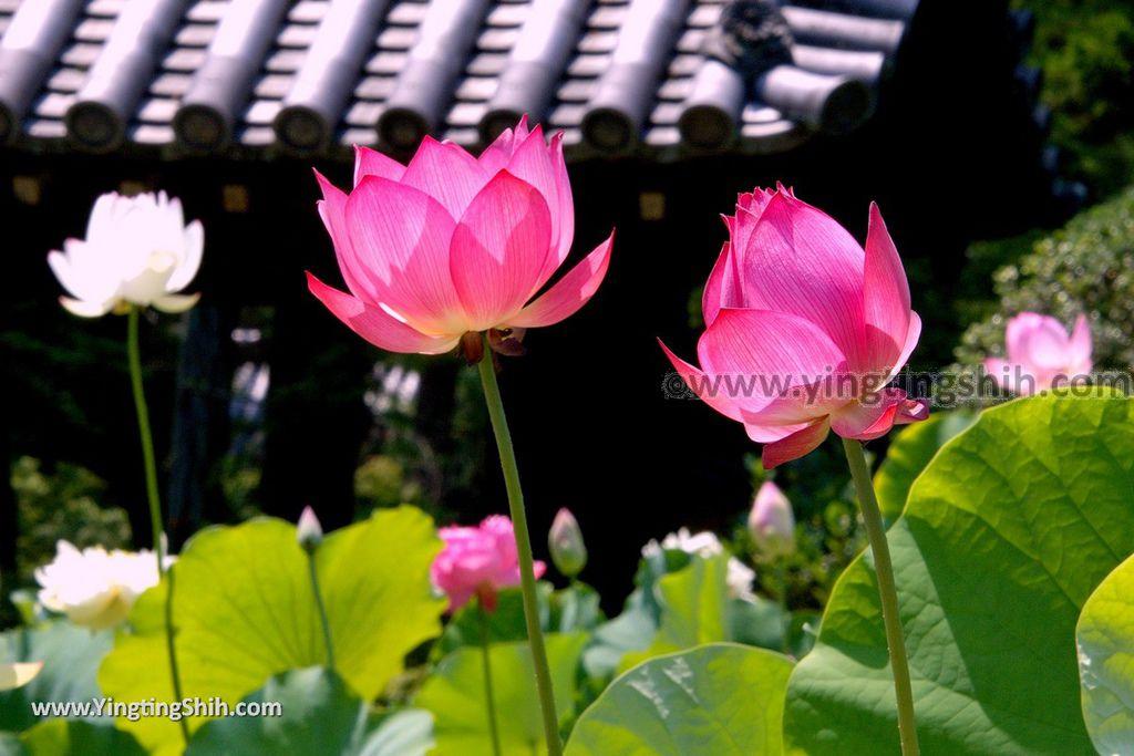 YTS_YTS_20180716_Japan Nara Toshodai-ji日本奈良唐招提寺/世界文化遺產/律宗總本山140_3A5A2572.jpg