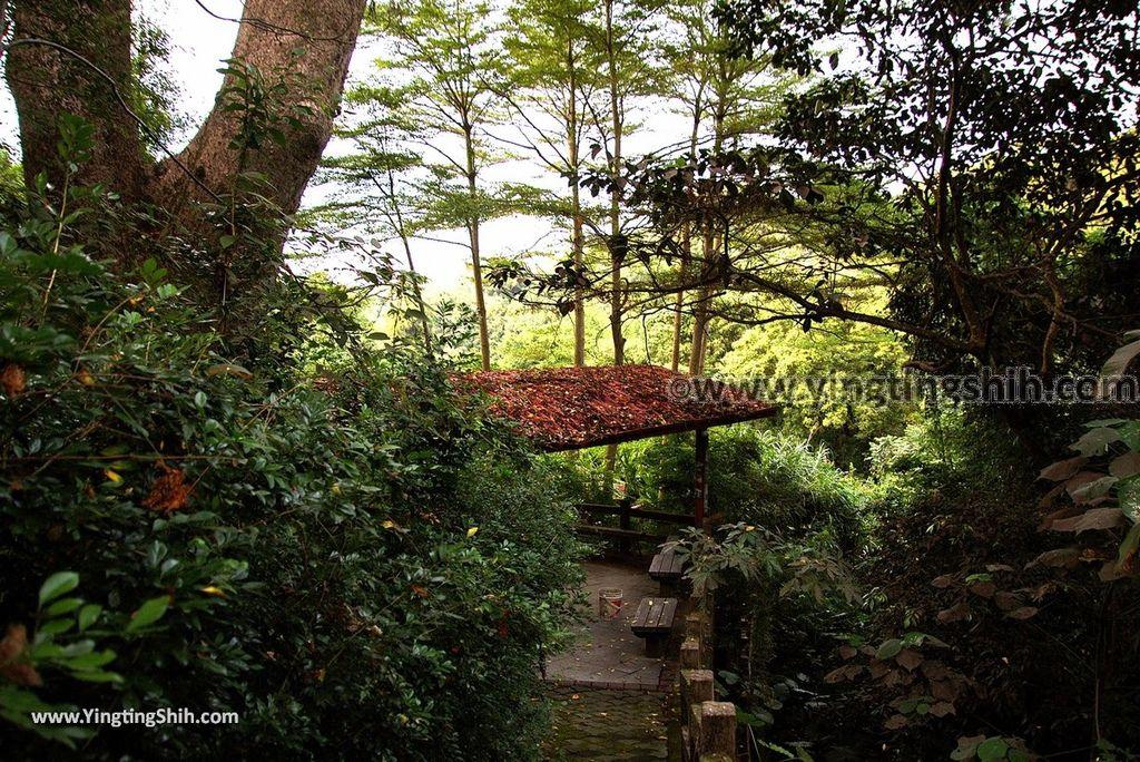 YTS_YTS_20181013_南投名間仁和大樟樹公Nantou Mingjian Comphor Tree/Giant Tree012_3A5A0716.jpg