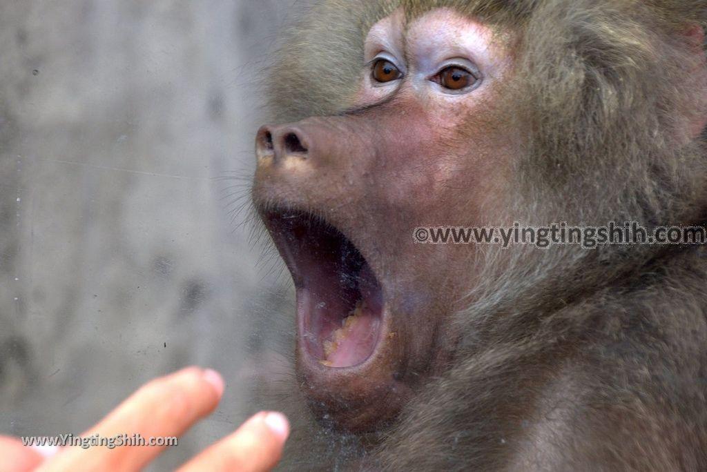 YTS_YTS_20170823_高雄鼓山壽山動物園Kaohsiung Gushan Shoushan Zoo239_3A5A1547.jpg