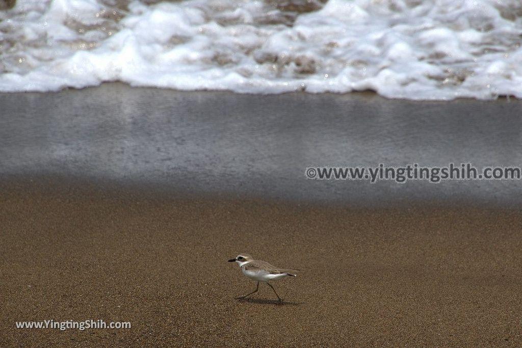 YTS_YTS_20180422_新北金山中角沙珠灣/沖浪天堂/金山萬里自行車道New Taipei Jinshan Shazhu Bay/Surf Paradise088_3A5A8579.jpg