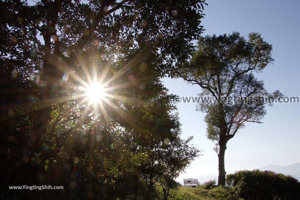 YTS_YTS_20181111_宜蘭員山燈嵩林道/櫻花林道Yilan Yuanshan Cherry Blossom Forest Path044_3A5A2300.jpg