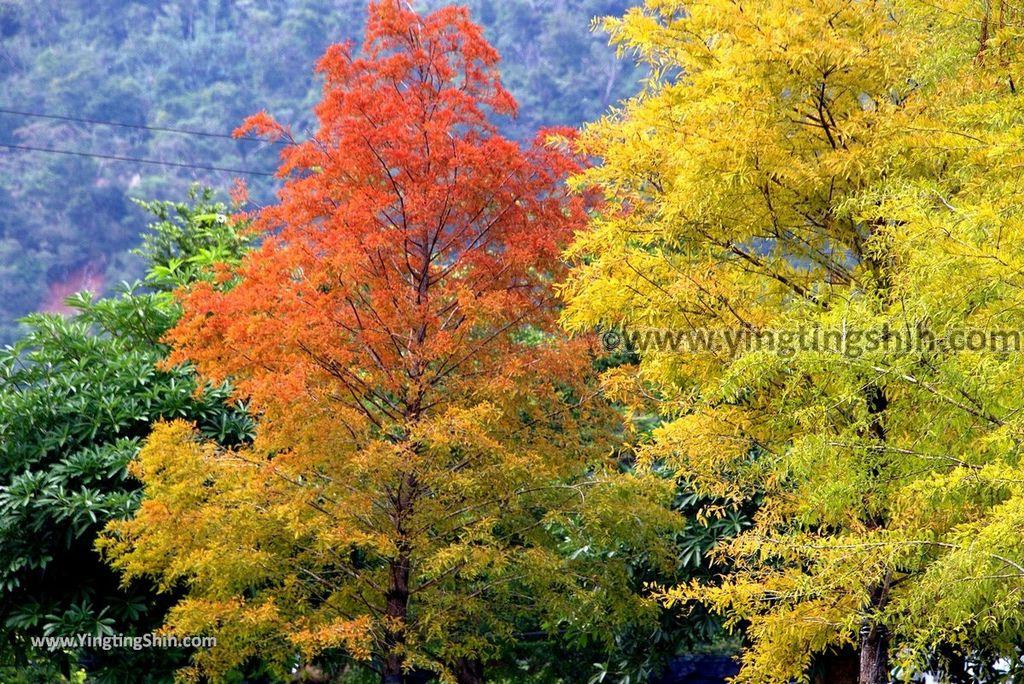 YTS_YTS_20181111_宜蘭冬山梅花湖風景區/環湖步道Yilan Dongshan Plum Blossom Lake/Hiking Trail081_3A5A6700.jpg