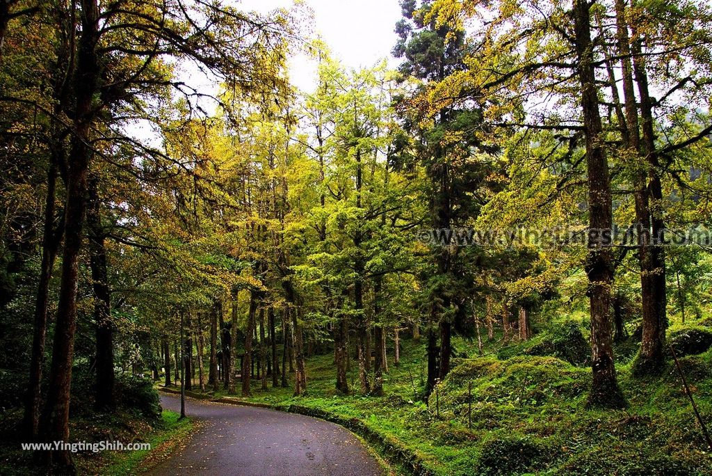 YTS_YTS_20181012_ 南投鹿谷溪頭自然教育園區Nantou Lugu Xitou Nature Education Area229_3A5A3208.jpg