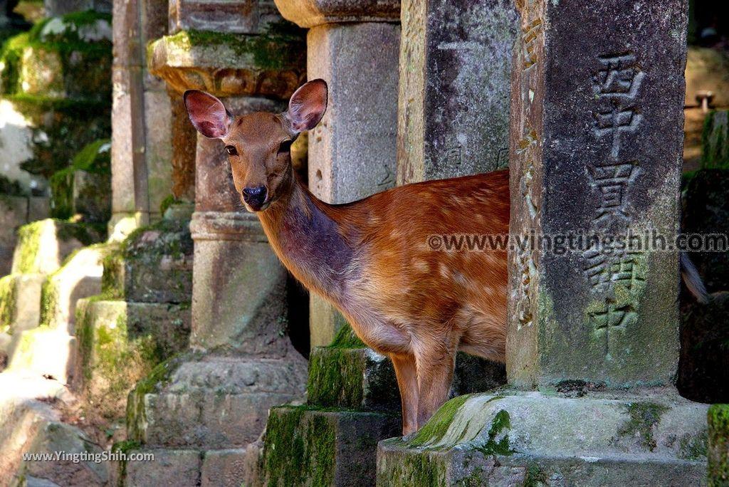 YTS_YTS_20180716_Japan Kansai Nara Kasuga-taisha/Nara Park日本關西奈良春日大社/夫婦大國社/奈良公園075_3A5A5136.jpg