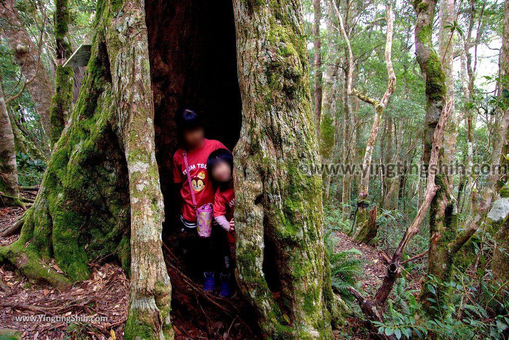 YTS_YTS_20190105_桃園復興塔曼山登山步道Taoyuan Fuxing Tamanshan Hiking Trail155_3A5A4705.jpg