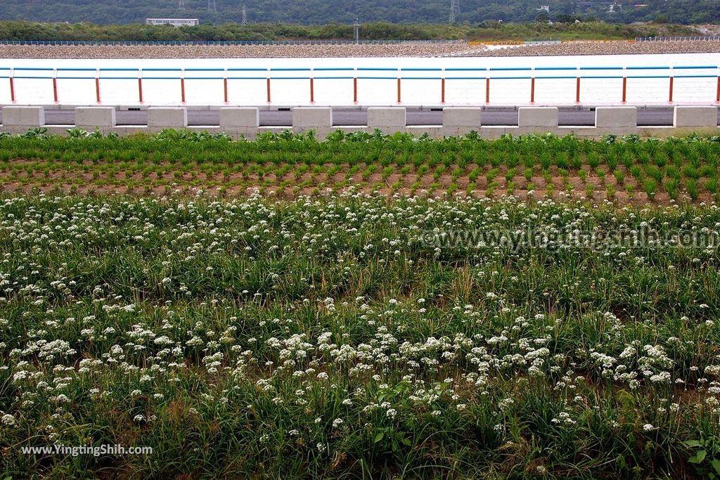 YTS_YTS_20171026_桃園大溪大鶯綠野景觀自行車道/大溪橋/中庄調整池Taoyuan Daxi District Daxi Yingge Bicycle Trail000_3A5A5990.jpg
