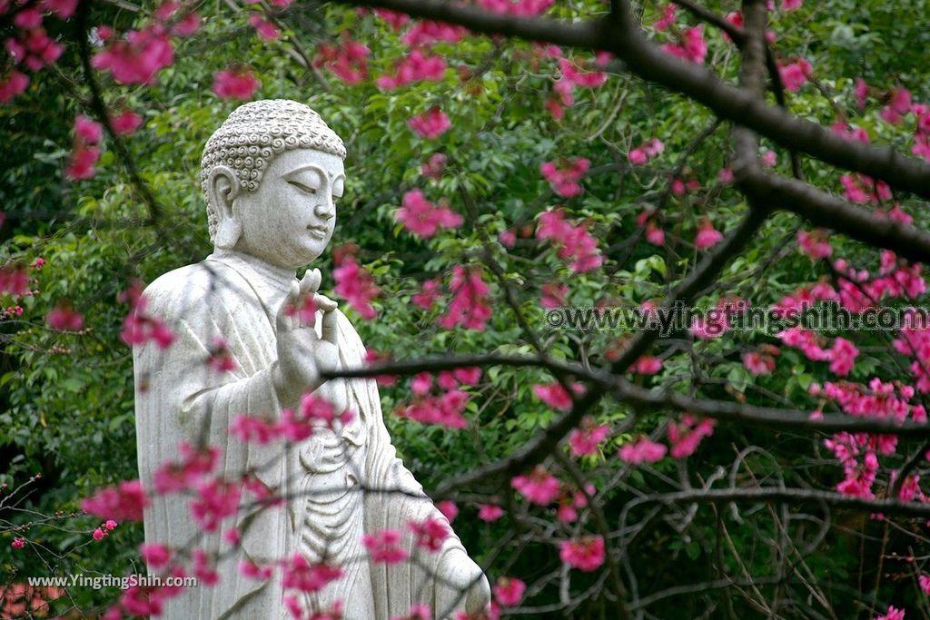 YTS_YTS_20190210_桃園楊梅麟鳳宮回善寺Taoyuan Yangmei Hueishan Temple009_539A0494.jpg