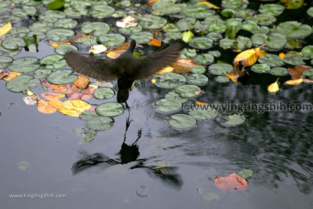 YTS_YTS_20190204_桃園八德埤塘生態公園/TINA廚房Taoyuan Bade Pond Ecology Park011_539A7369.jpg