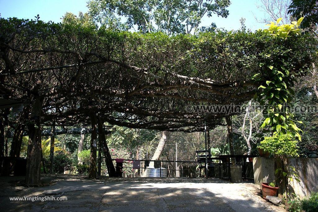 YTS_YTS_20190209_台南官田川文山森林生態保育農場/步道Tainan Guantian Chuan Wenshan Forest Ecological Conservation Farm015_539A9133.jpg