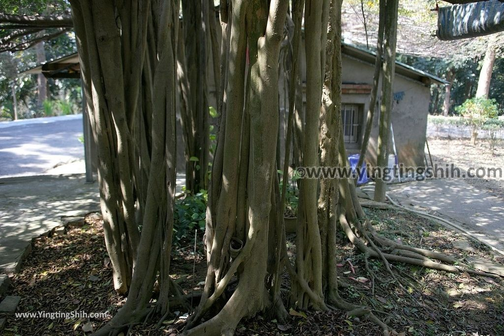 YTS_YTS_20190209_台南官田川文山森林生態保育農場/步道Tainan Guantian Chuan Wenshan Forest Ecological Conservation Farm018_539A9137.jpg