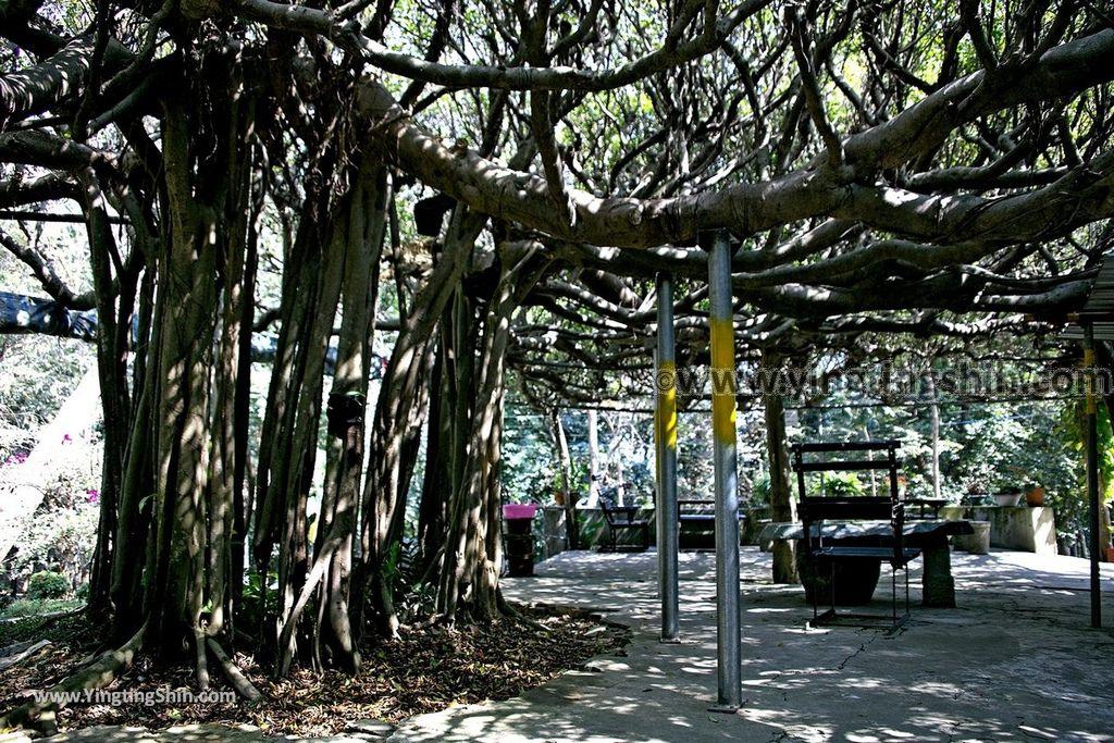 YTS_YTS_20190209_台南官田川文山森林生態保育農場/步道Tainan Guantian Chuan Wenshan Forest Ecological Conservation Farm020_539A9141.jpg
