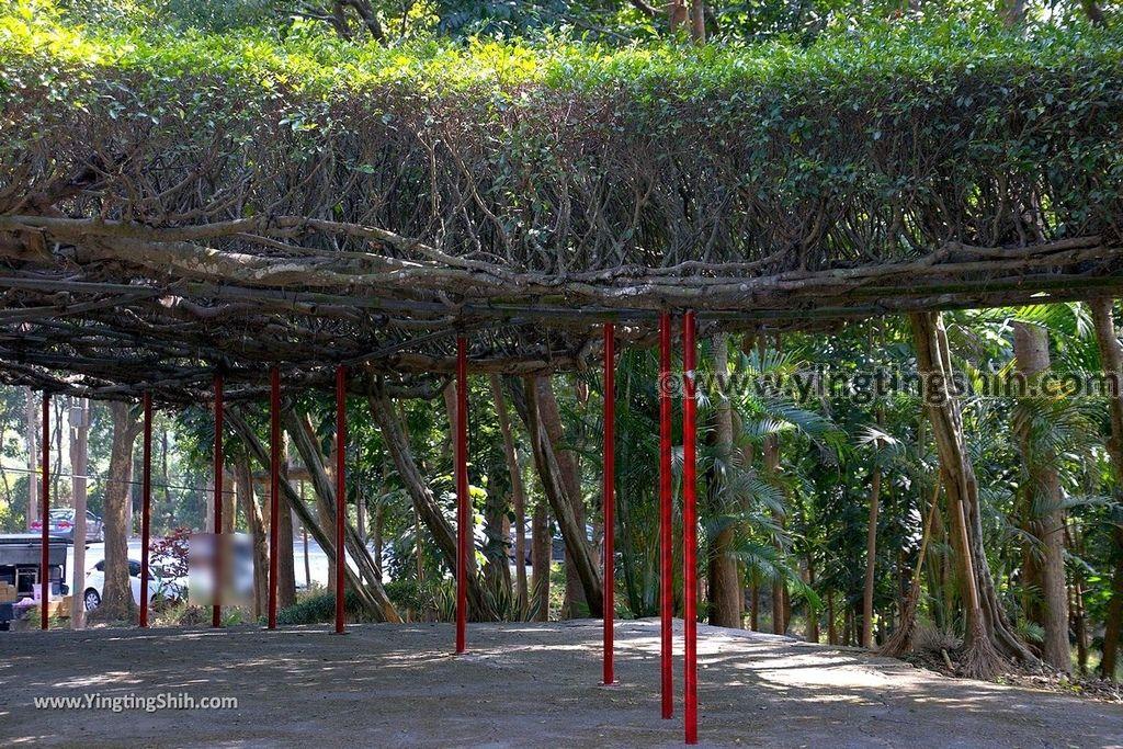 YTS_YTS_20190209_台南官田川文山森林生態保育農場/步道Tainan Guantian Chuan Wenshan Forest Ecological Conservation Farm024_539A9146.jpg