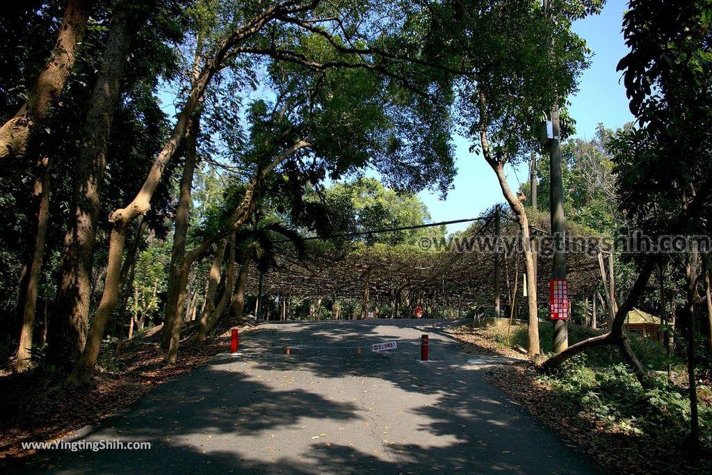 YTS_YTS_20190209_台南官田川文山森林生態保育農場/步道Tainan Guantian Chuan Wenshan Forest Ecological Conservation Farm030_539A9153.jpg