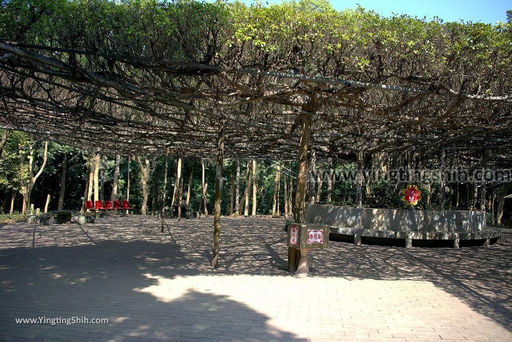 YTS_YTS_20190209_台南官田川文山森林生態保育農場/步道Tainan Guantian Chuan Wenshan Forest Ecological Conservation Farm036_539A9159.jpg