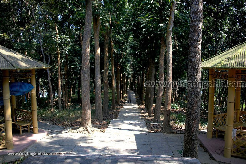 YTS_YTS_20190209_台南官田川文山森林生態保育農場/步道Tainan Guantian Chuan Wenshan Forest Ecological Conservation Farm040_539A9174.jpg