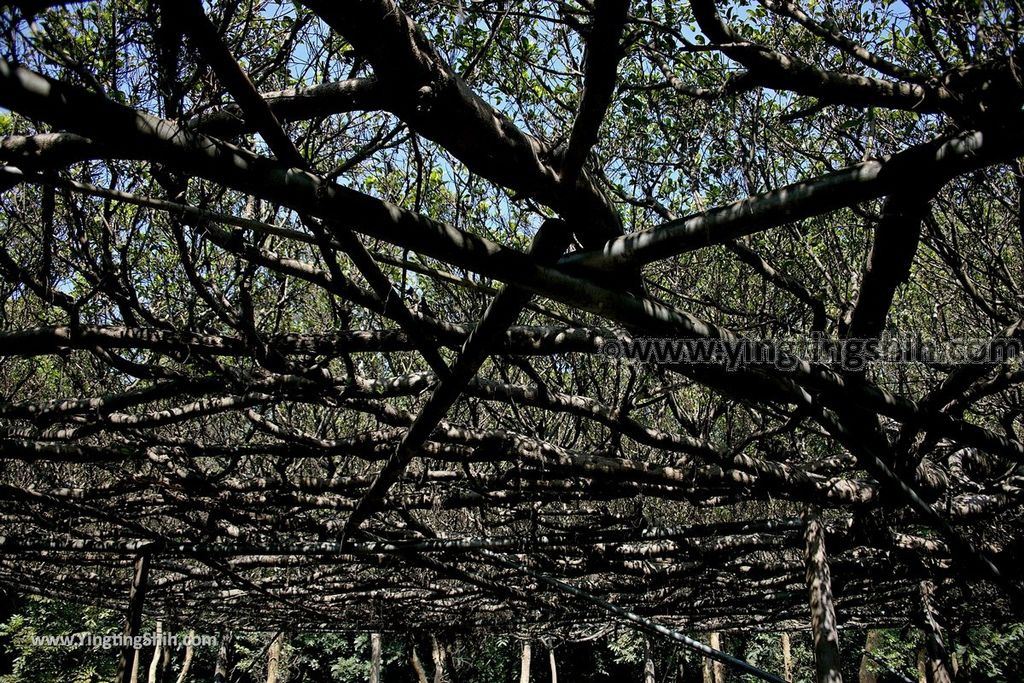 YTS_YTS_20190209_台南官田川文山森林生態保育農場/步道Tainan Guantian Chuan Wenshan Forest Ecological Conservation Farm047_539A9164.jpg