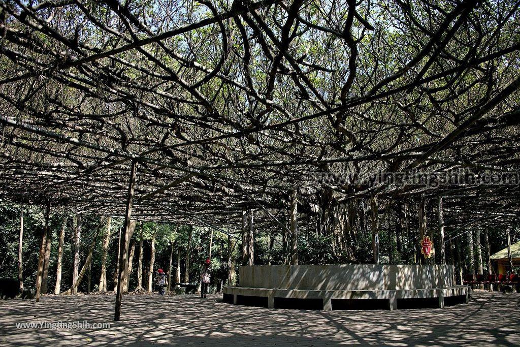 YTS_YTS_20190209_台南官田川文山森林生態保育農場/步道Tainan Guantian Chuan Wenshan Forest Ecological Conservation Farm045_539A9169.jpg