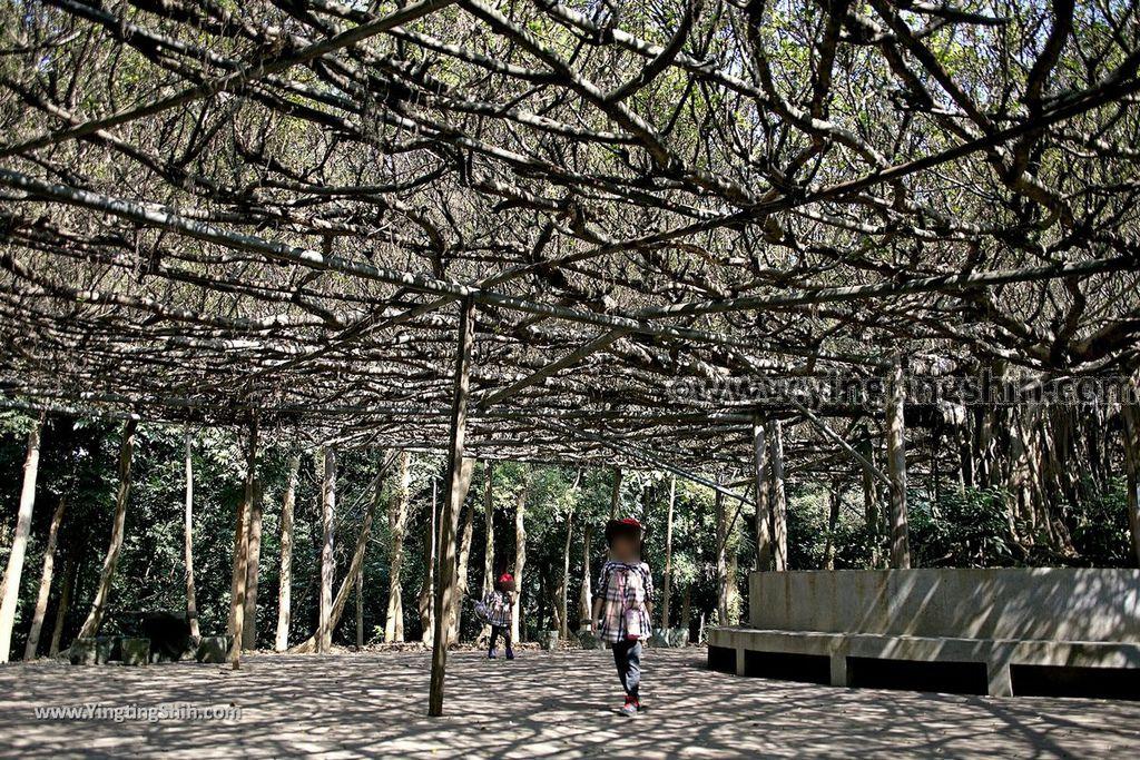 YTS_YTS_20190209_台南官田川文山森林生態保育農場/步道Tainan Guantian Chuan Wenshan Forest Ecological Conservation Farm046_539A9171.jpg