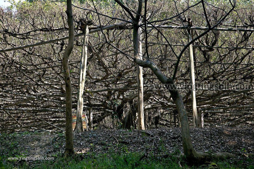 YTS_YTS_20190209_台南官田川文山森林生態保育農場/步道Tainan Guantian Chuan Wenshan Forest Ecological Conservation Farm050_539A9296.jpg