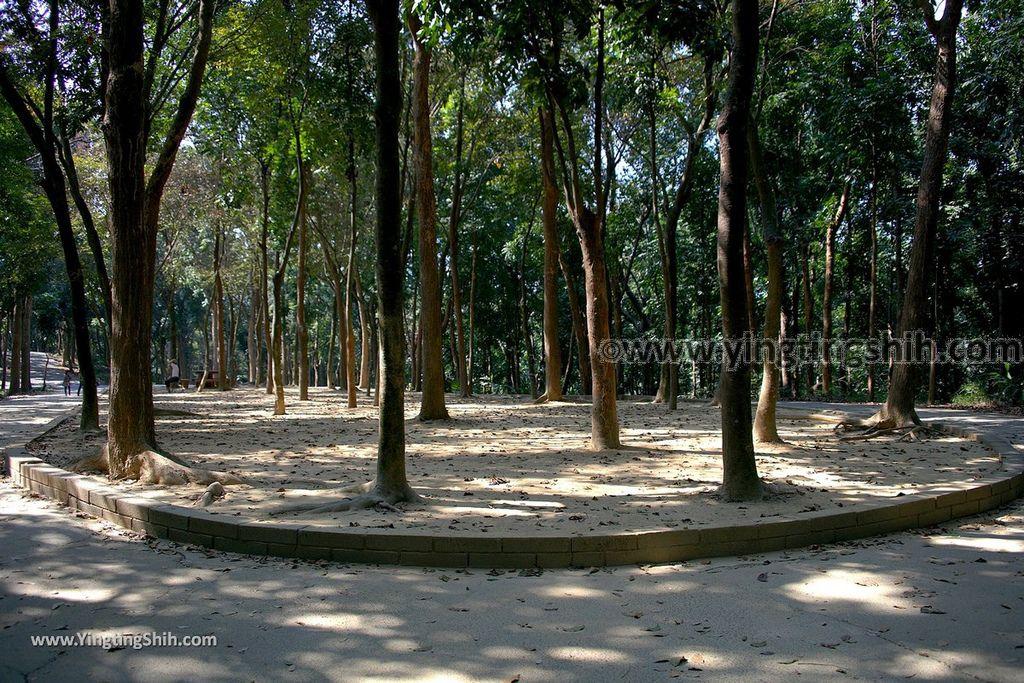 YTS_YTS_20190209_台南官田川文山森林生態保育農場/步道Tainan Guantian Chuan Wenshan Forest Ecological Conservation Farm059_539A9244.jpg