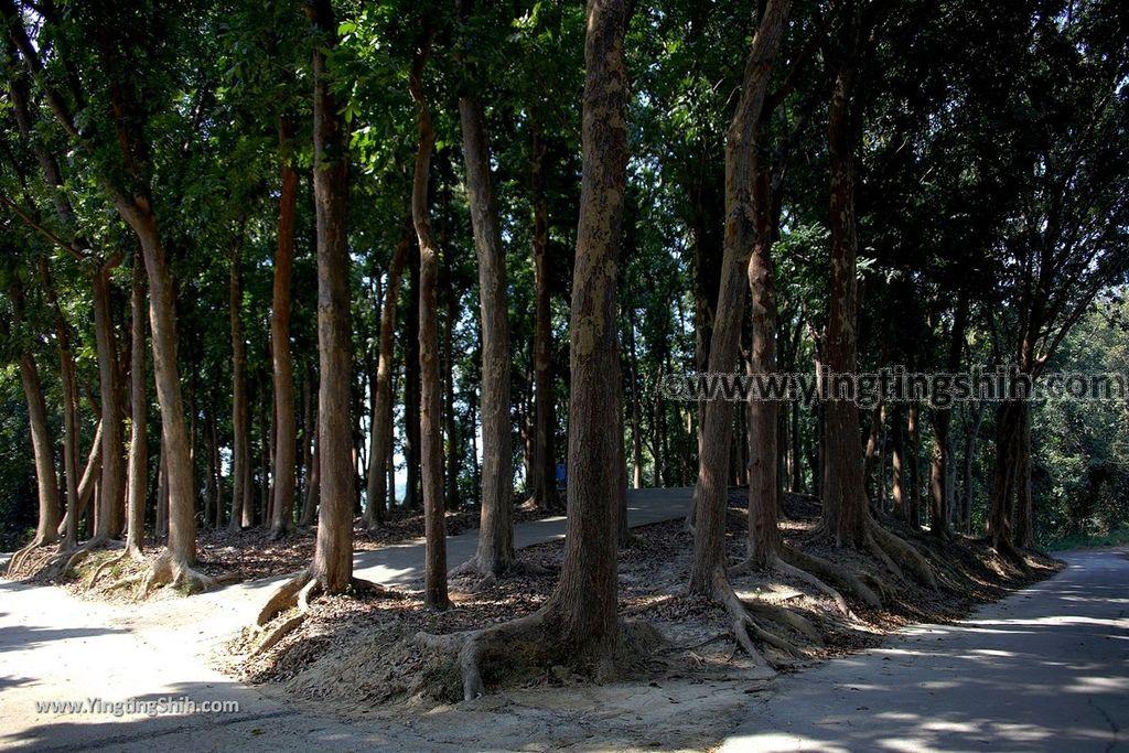 YTS_YTS_20190209_台南官田川文山森林生態保育農場/步道Tainan Guantian Chuan Wenshan Forest Ecological Conservation Farm072_539A9188.jpg