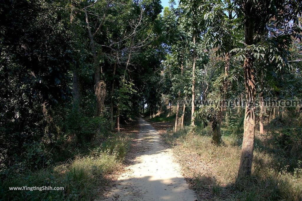 YTS_YTS_20190209_台南官田川文山森林生態保育農場/步道Tainan Guantian Chuan Wenshan Forest Ecological Conservation Farm076_539A9210.jpg