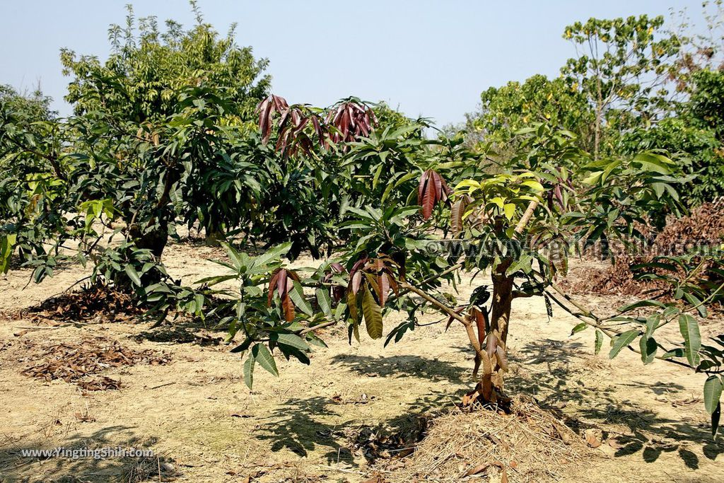 YTS_YTS_20190209_台南官田川文山森林生態保育農場/步道Tainan Guantian Chuan Wenshan Forest Ecological Conservation Farm079_539A9220.jpg