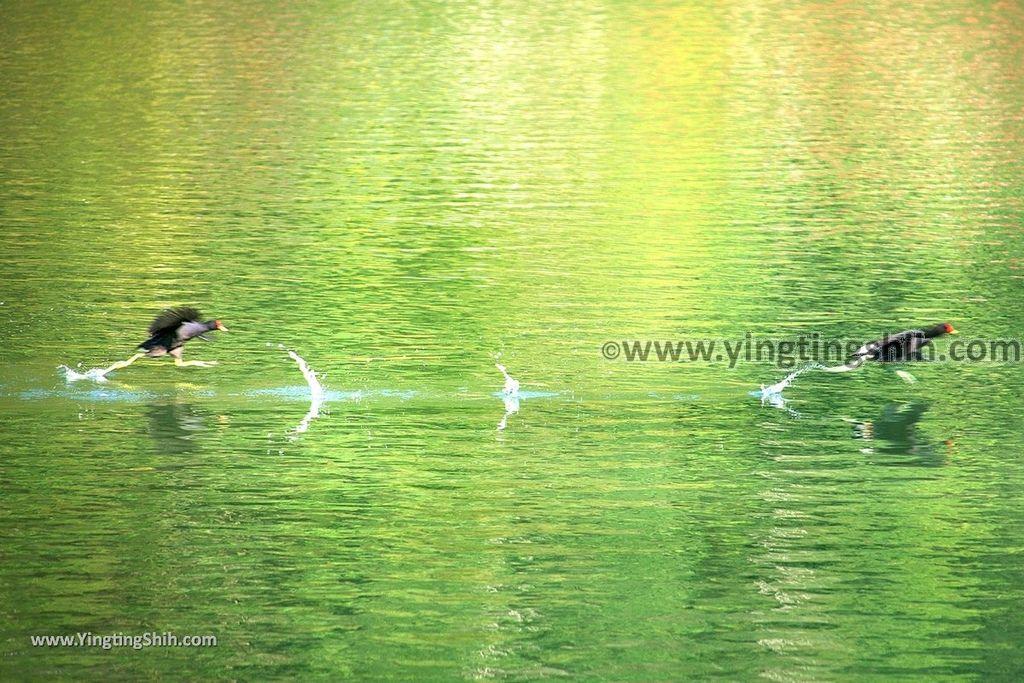 YTS_YTS_20190310_宜蘭員山望龍埤/飛龍步道/環湖步道Yilan Yuanshan Wanglongpi Trail022_539A7591.jpg