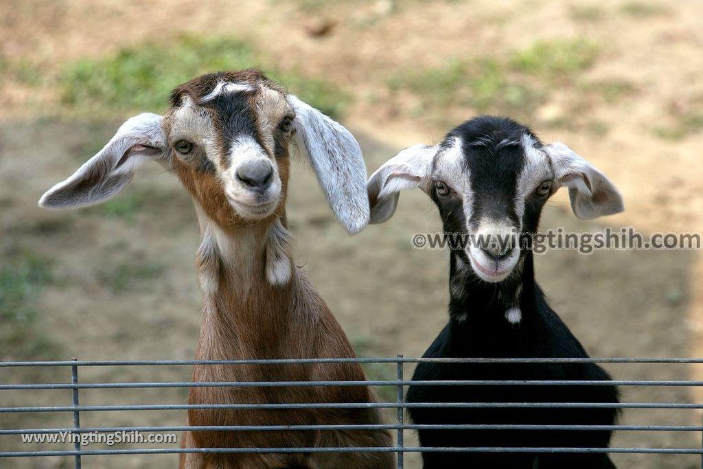 YTS_YTS_20190318_台南柳營八老爺牧場/乳牛的家Tainan Liouying The Cow%5Cs Home/Ranch095_539A1123.jpg