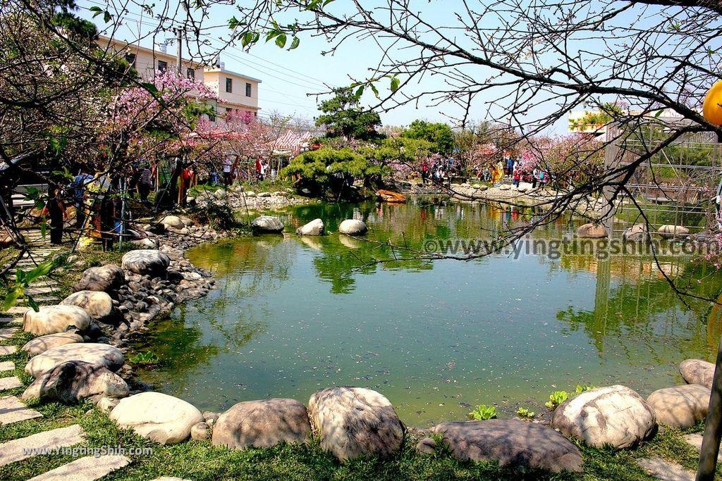 YTS_YTS_20190301_台中烏日彰化芬園花卉生產休憩園區/櫻花園區Taichung Wuri Cherry Blossom Park014_539A4763.jpg