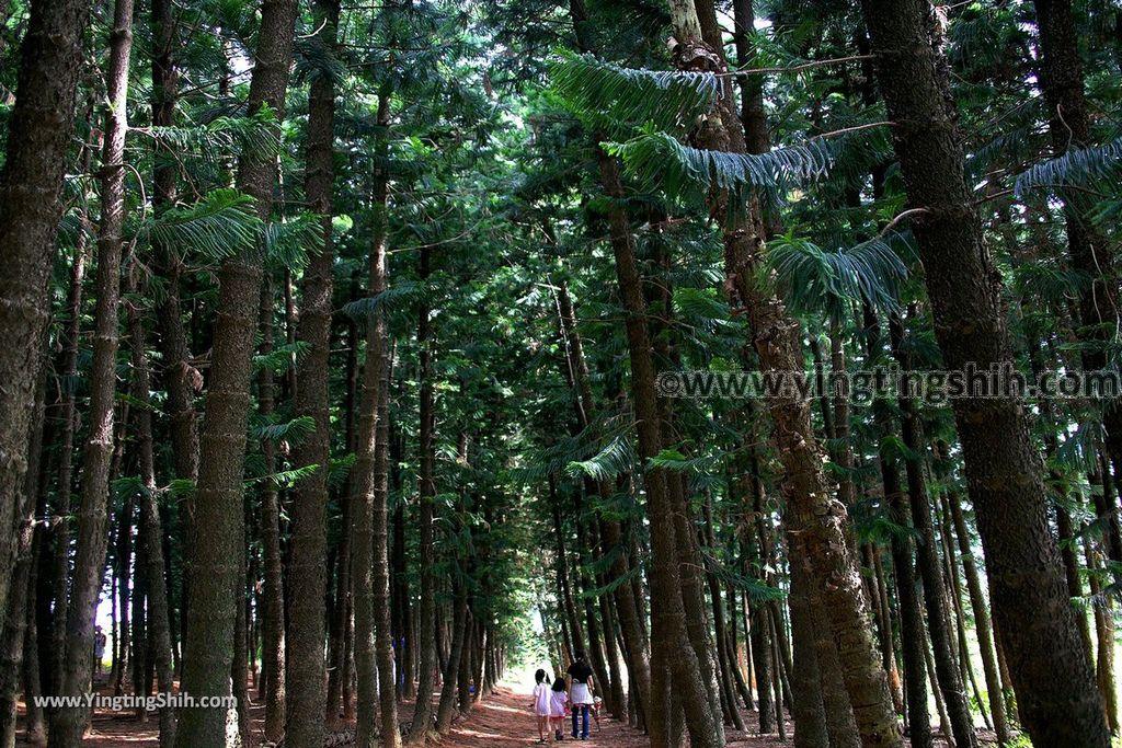 YTS_YTS_20190609_台中沙鹿九天黑森林Taichung Shalu Black Forest038_539A9588.jpg