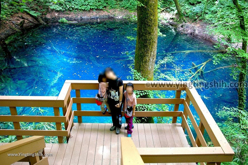 第1764篇 日本東北 青森世界自然遺產 白神山地十二湖 青池 森の物産