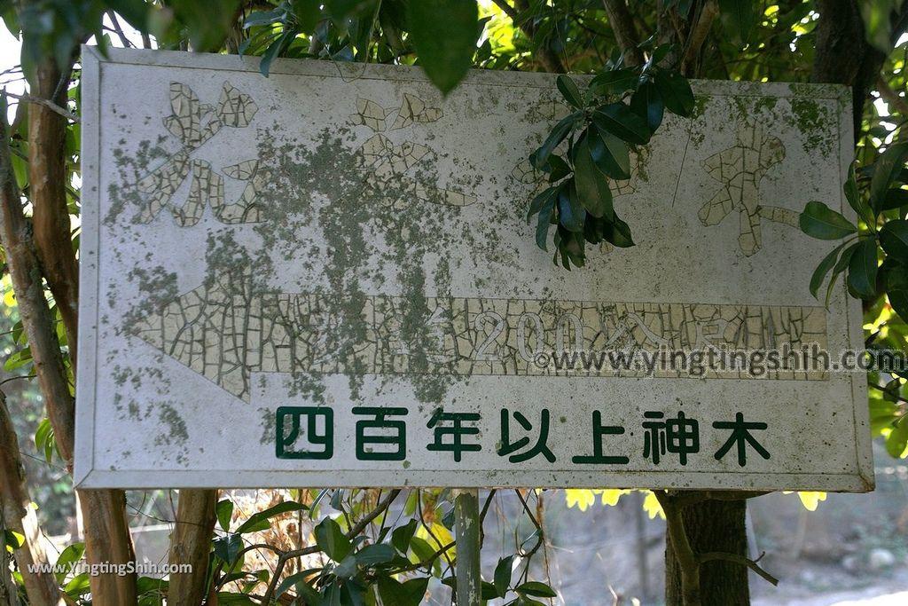 YTS_YTS_20191116_南投國姓寶島神木/看見台灣/茄苳神木/糯米橋休閒農業區Nantou Guoxing Jiadong Giant Tree014_539A4155.jpg