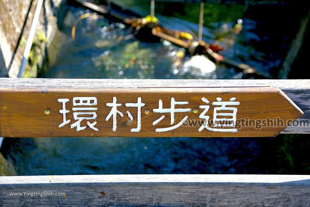 YTS_YTS_20191116_南投國姓寶島神木/看見台灣/茄苳神木/糯米橋休閒農業區Nantou Guoxing Jiadong Giant Tree024_539A4188.jpg