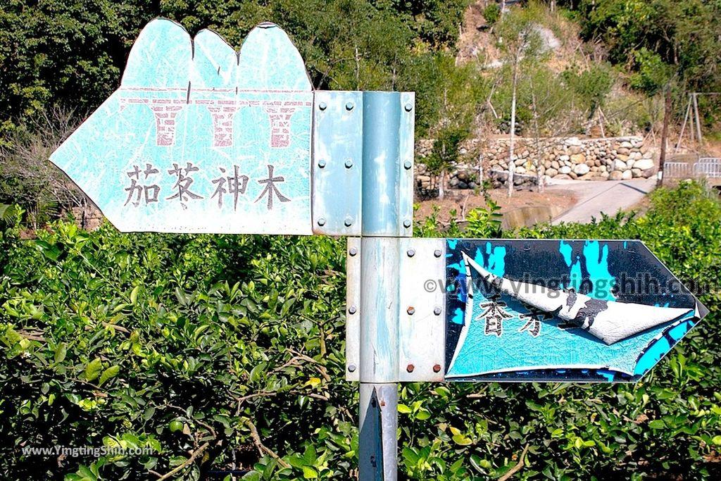 YTS_YTS_20191116_南投國姓寶島神木/看見台灣/茄苳神木/糯米橋休閒農業區Nantou Guoxing Jiadong Giant Tree025_539A4183.jpg