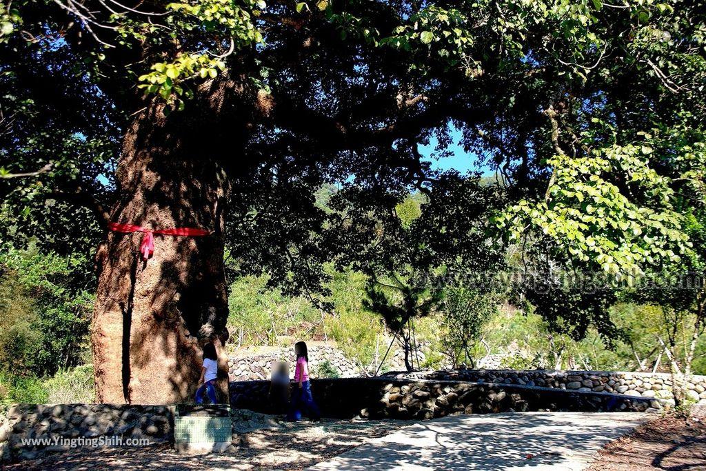 YTS_YTS_20191116_南投國姓寶島神木/看見台灣/茄苳神木/糯米橋休閒農業區Nantou Guoxing Jiadong Giant Tree033_539A4212.jpg