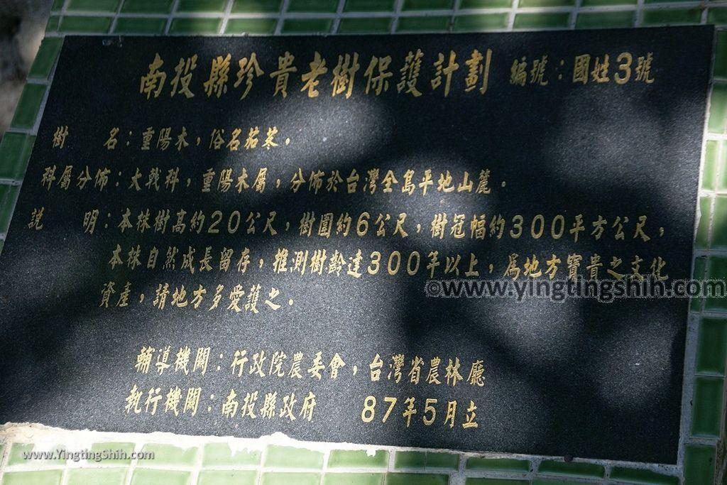 YTS_YTS_20191116_南投國姓寶島神木/看見台灣/茄苳神木/糯米橋休閒農業區Nantou Guoxing Jiadong Giant Tree034_539A4214.jpg