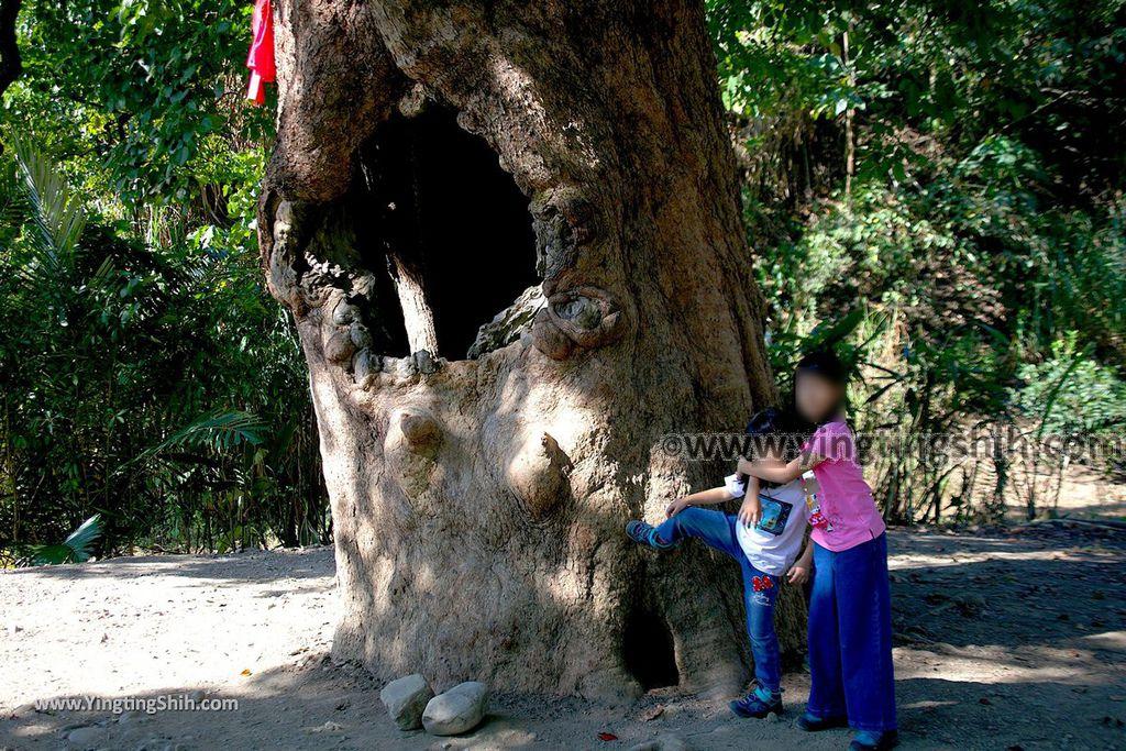 YTS_YTS_20191116_南投國姓寶島神木/看見台灣/茄苳神木/糯米橋休閒農業區Nantou Guoxing Jiadong Giant Tree035_539A4223.jpg