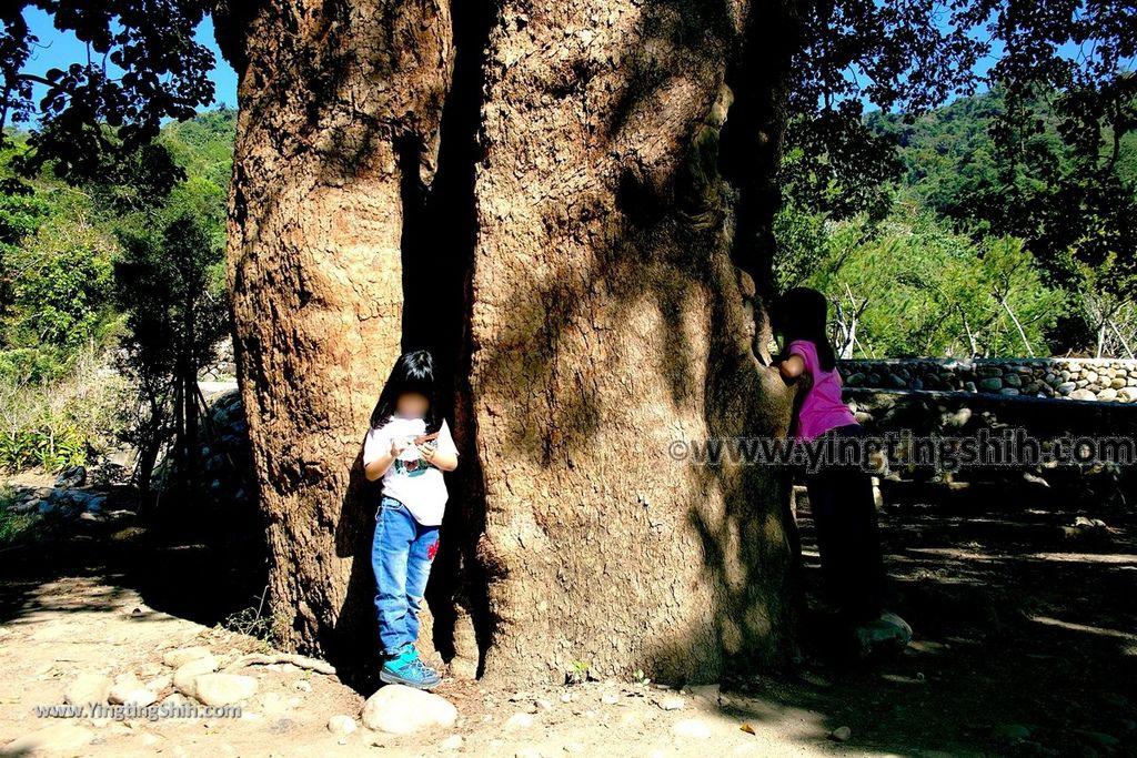 YTS_YTS_20191116_南投國姓寶島神木/看見台灣/茄苳神木/糯米橋休閒農業區Nantou Guoxing Jiadong Giant Tree037_539A4216.jpg