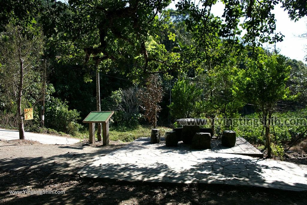 YTS_YTS_20191116_南投國姓寶島神木/看見台灣/茄苳神木/糯米橋休閒農業區Nantou Guoxing Jiadong Giant Tree044_539A4259.jpg