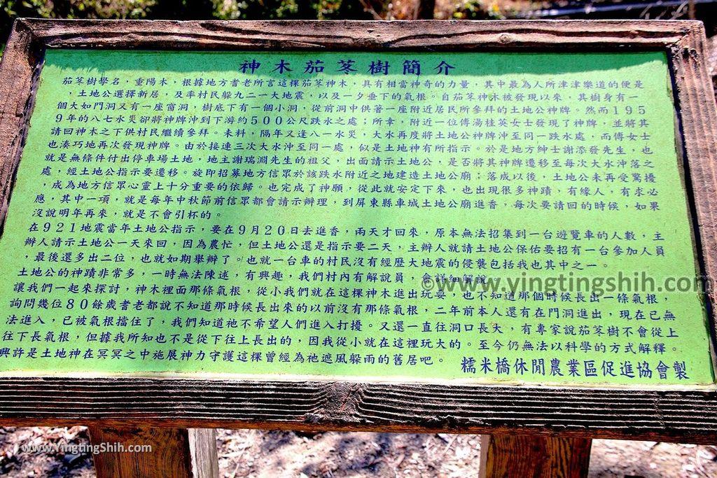 YTS_YTS_20191116_南投國姓寶島神木/看見台灣/茄苳神木/糯米橋休閒農業區Nantou Guoxing Jiadong Giant Tree045_539A4260.jpg