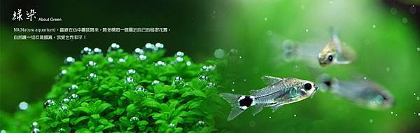綠染標頭P.jpg