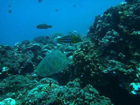 海底世界 (4)