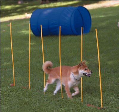 柴犬廣告照