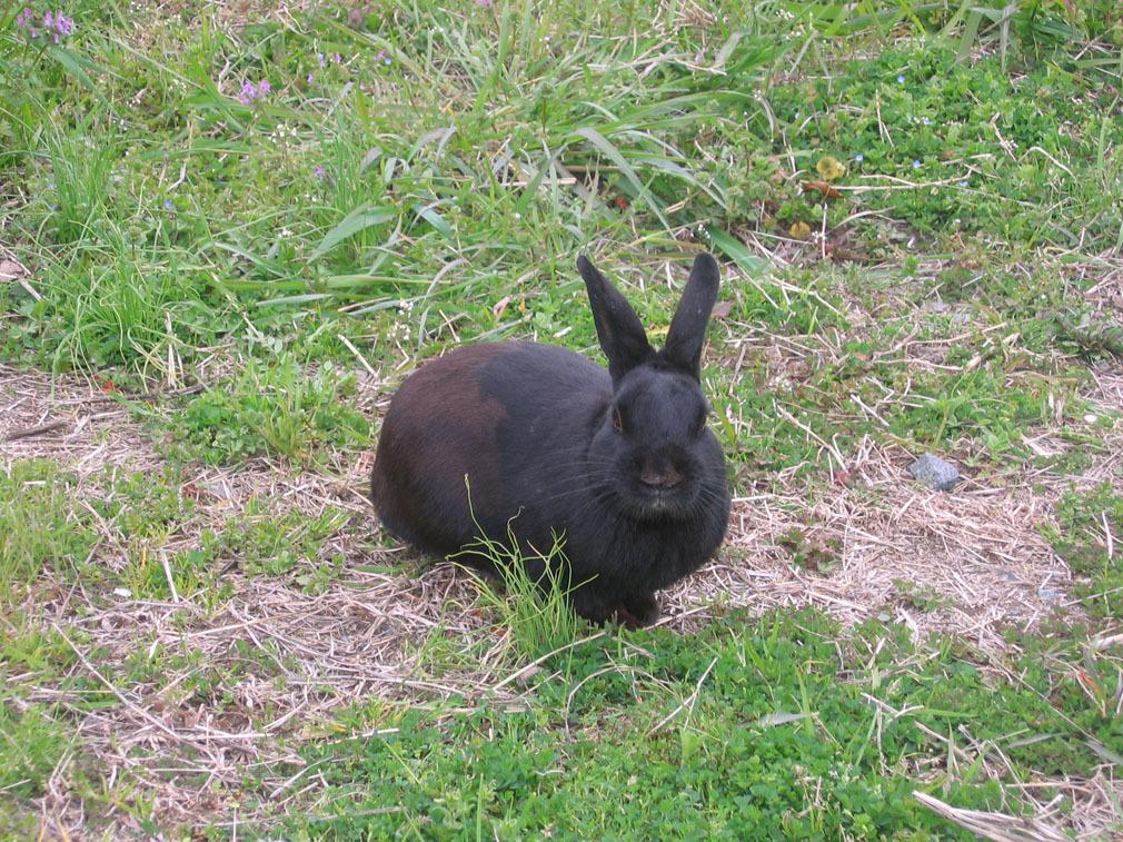 等九州橫斷巴士時遇見的野兔
