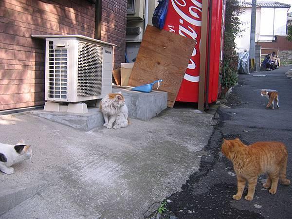 長崎的貓也很多